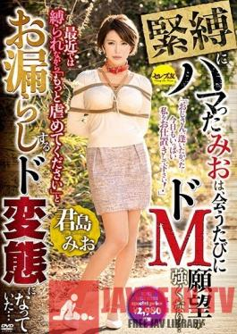 CESD-745 Studio Celeb no Tomo - Mio Has Gotten Hooked On S&M, And Now, Every Time We Meet, Her Maso Desires Get Stronger And Stronger... These Days, When I Tie Her Up, She Begs, Hurt Me Harder And Turned Into A Pissing Pervert... Mio Kimijima